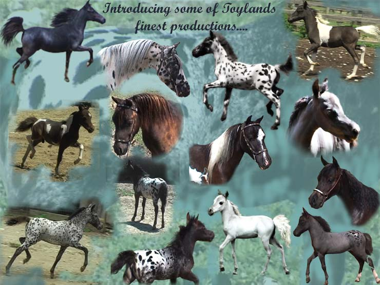 Photo Collage of Falabella Miniature Horses